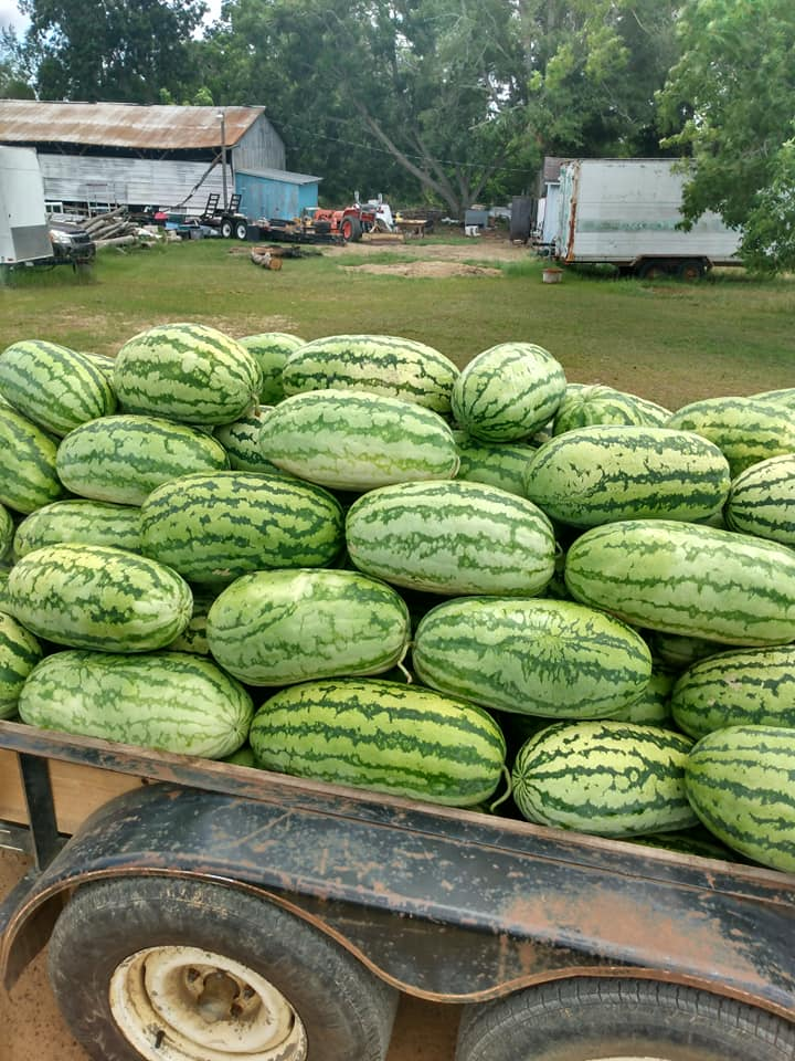 Watermelons 1